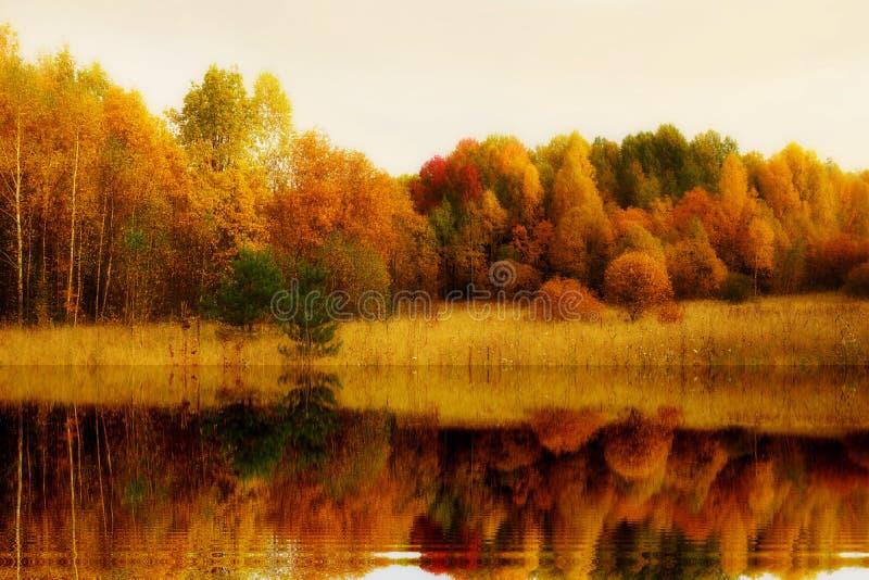 jesieni jesieni krajobrazowy Złoty odbicie drzewa w wodzie fotografia royalty free