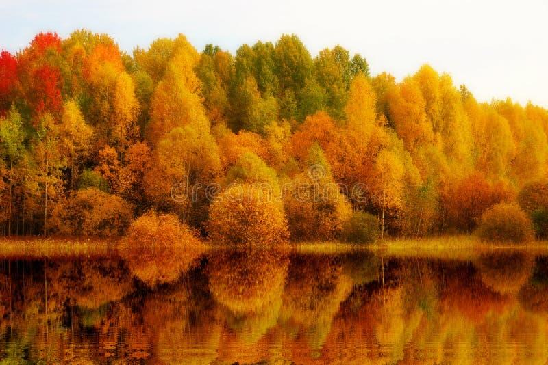 jesieni jesieni krajobrazowy Złoty odbicie drzewa w wodzie zdjęcia stock