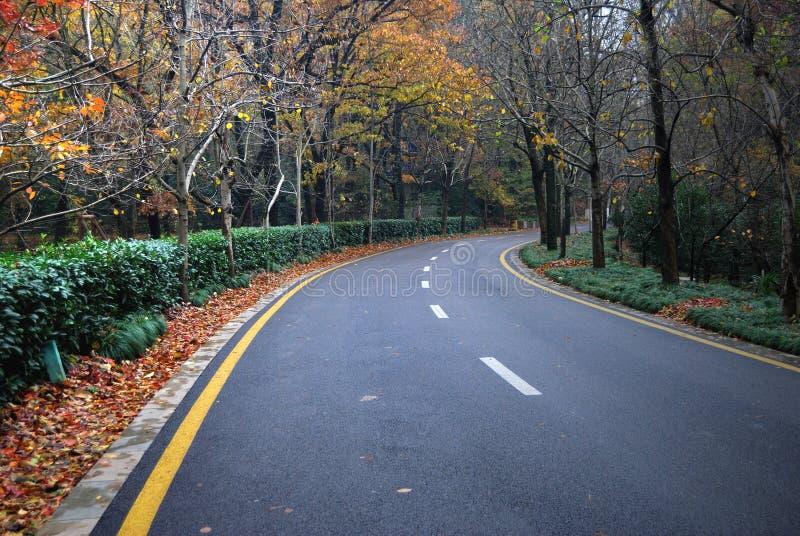 Download Jesieni Lasowa Droga W Drewnach Zdjęcie Stock - Obraz: 28492350