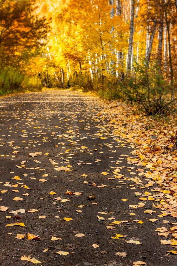 Jesieni lasowa droga z złoto liśćmi - krajobraz fotografia stock
