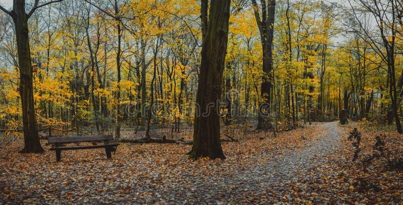 Jesieni lasowa scena z pustą ławką Wijący chodzącej ścieżki ulistnienia liścia spadek zdjęcia royalty free