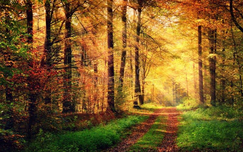 Jesieni lasowa sceneria z promieniami ciepły światło zdjęcia stock