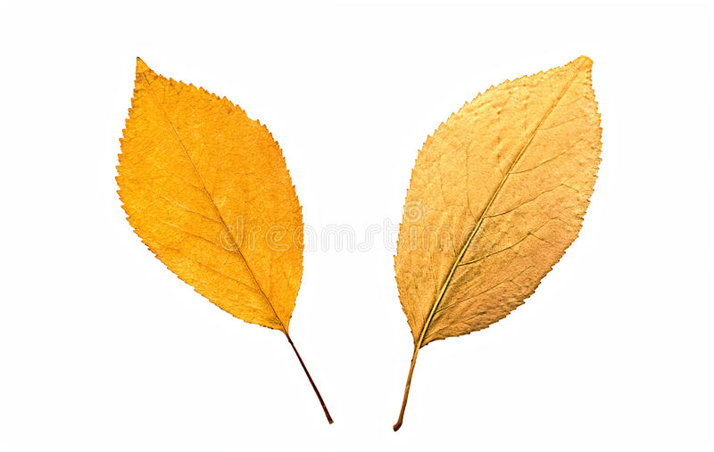 Jesieni leafes obrazy stock