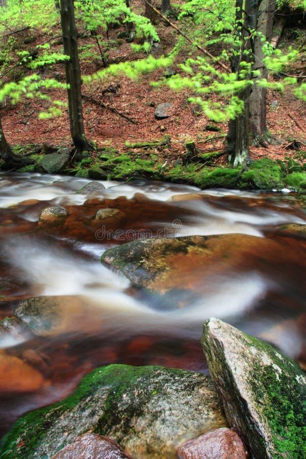 Jesieni lub lata brzeg rzeki z bukowymi liśćmi Świezi zieleni liście na gałąź above - woda robi odbiciu Dżdżysty wieczór przy str zdjęcie stock