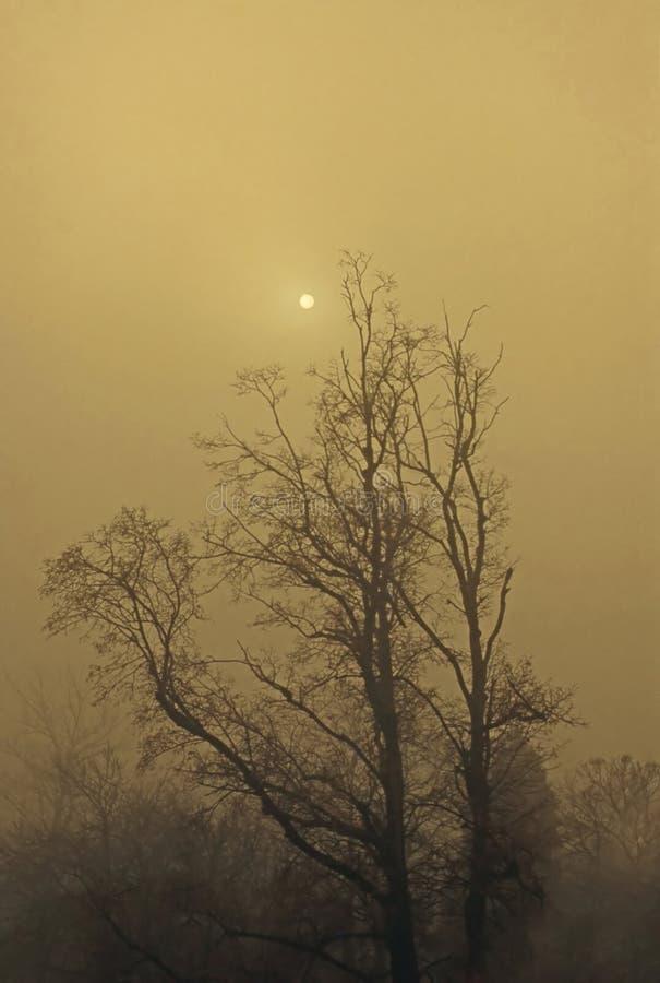 Jesieni mgła obraz royalty free