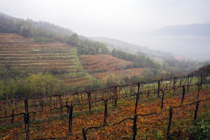 Jesieni mgła w Alpejskim winnicy zdjęcia royalty free