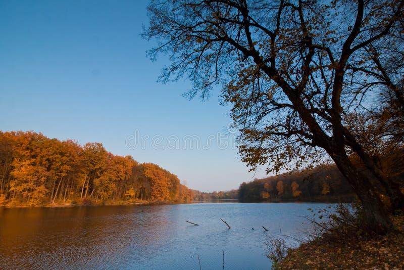 Jesieni midday krajobraz z lasem i jeziorem, grabowy drzewo, sezonowa tło tekstury fotografia fotografia royalty free