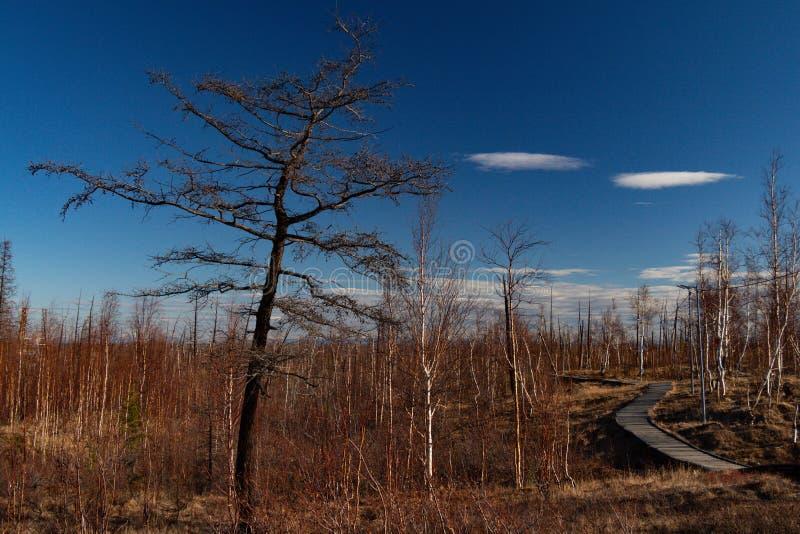 Jesieni natura Taimyr Norilsk fotografia stock