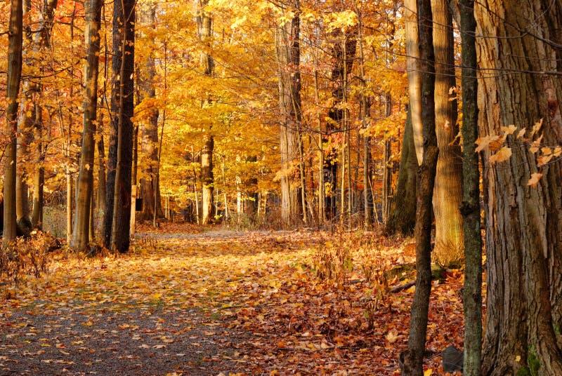 Jesieni natury ślad fotografia royalty free