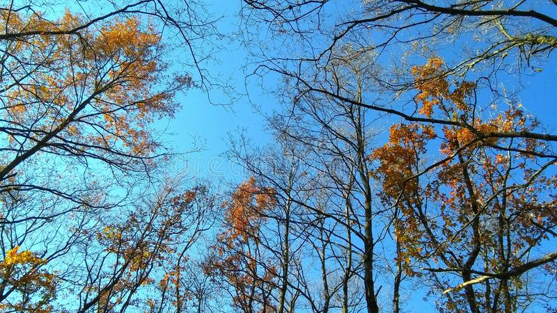 Jesieni niebo obraz stock