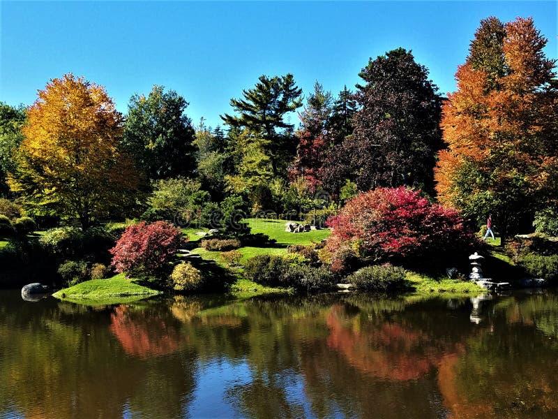 Jesieni odbicia na stawie fotografia stock