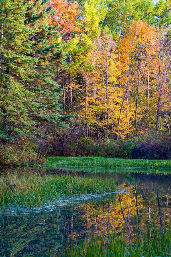 Jesieni odbicia przy Palcowym jezioro lasem państwowym zdjęcia royalty free