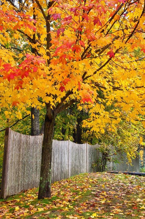 Jesieni ogrodzenie i drzewo obraz stock