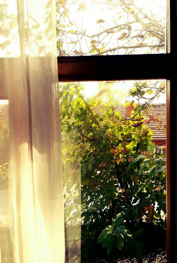 Jesieni okno obraz stock