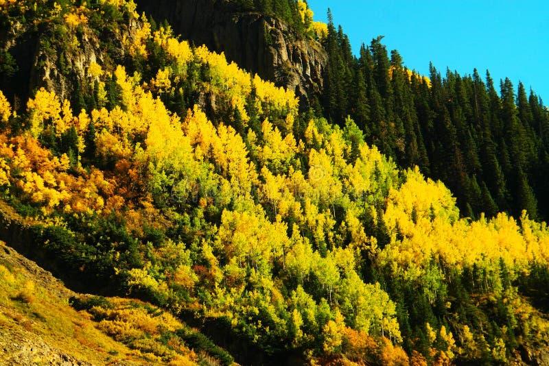 Jesieni osiki obrazy stock