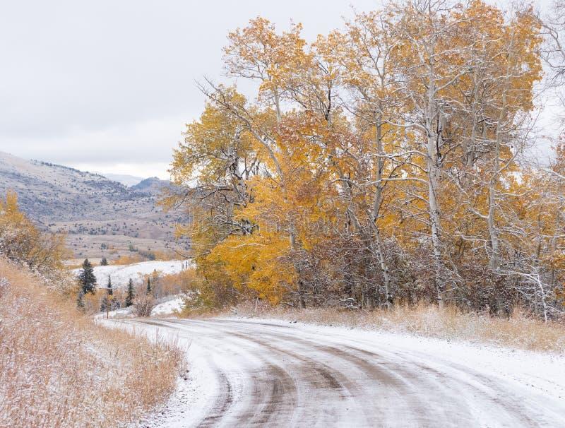 Jesieni Osikowi drzewa Wzdłuż Śnieżnej wiejskiej drogi obrazy stock