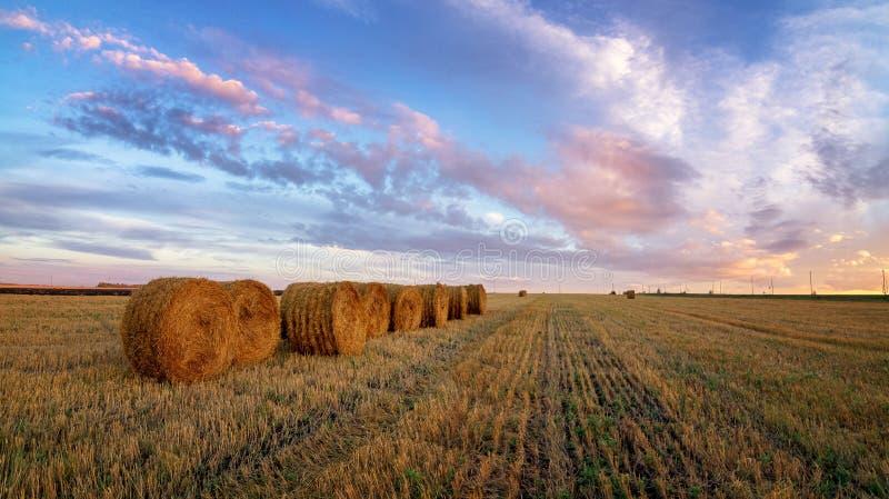 Jesieni panoramy wiejski pole z rżniętą trawą przy zmierzchem zdjęcia royalty free