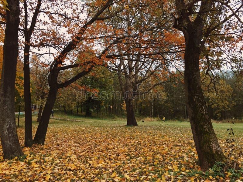 Jesieni parklife zdjęcie royalty free