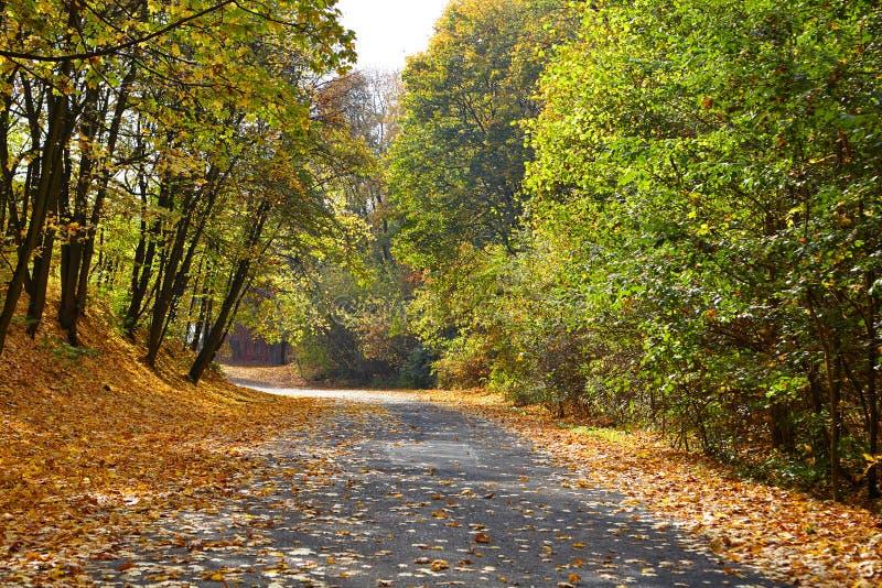 Jesieni parkowa aleja fotografia royalty free