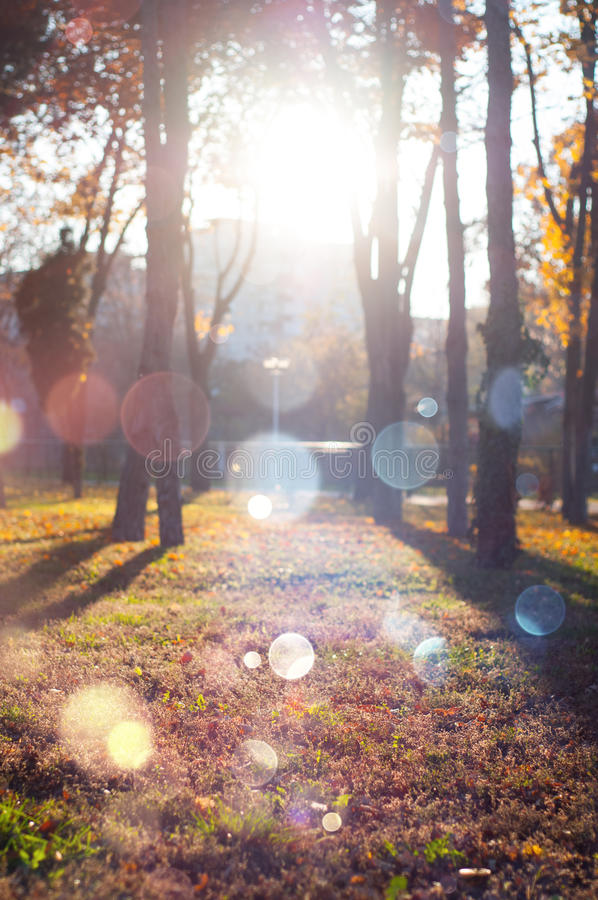 Jesieni parkowa sceneria fotografia stock