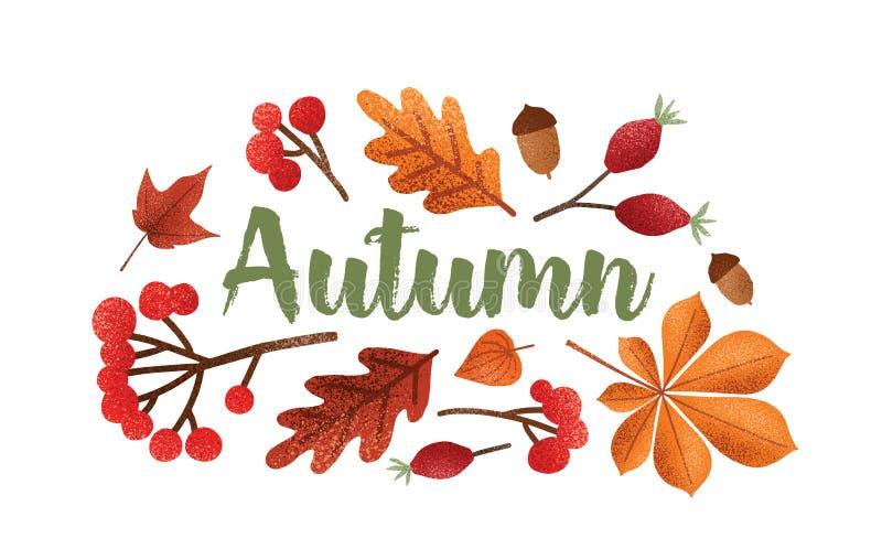 Jesieni pisać list ręcznie pisany z piękną kursywną kaligraficzną chrzcielnicą dekorującą z spadać drzewnymi liśćmi, acorns, jago ilustracja wektor