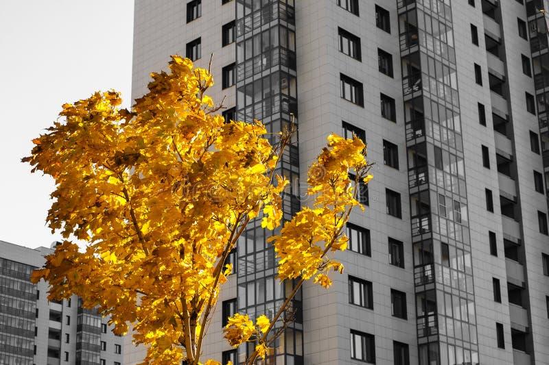 Jesieni pogody kolor zdjęcie royalty free