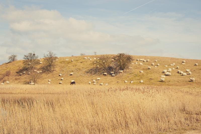 Jesieni pole z caklami obrazy stock