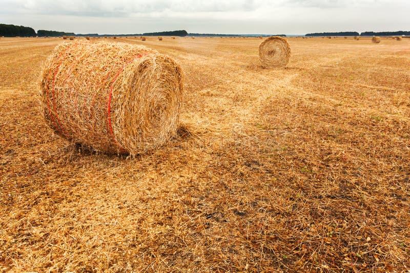 Jesieni pole z snopami siano i dramatyczny niebo zdjęcie royalty free