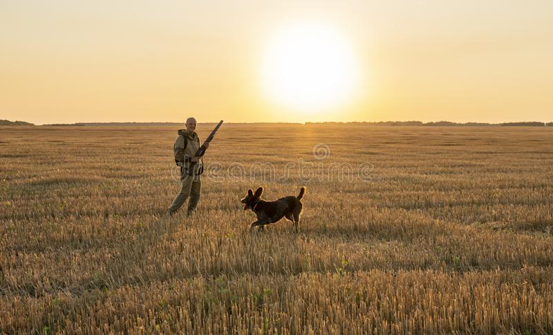 Jesieni polowanie dla śródpolnej gry z psem przy zmierzchem fotografia stock