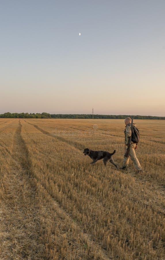 Jesieni polowanie dla śródpolnej gry z psem przy zmierzchem obraz stock