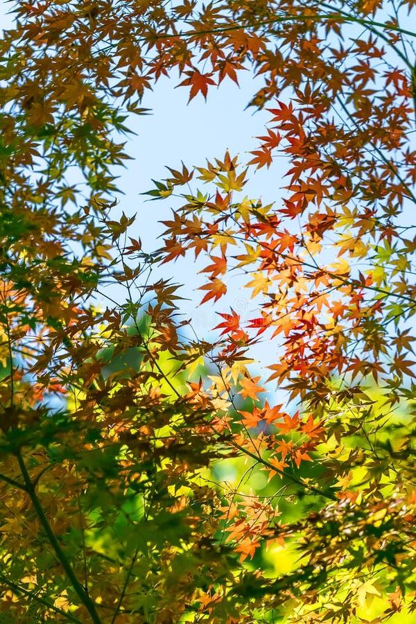Jesieni popołudnie fotografia royalty free