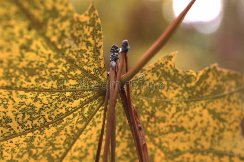 Jesieni prześcieradło jest w starym parku zdjęcie royalty free
