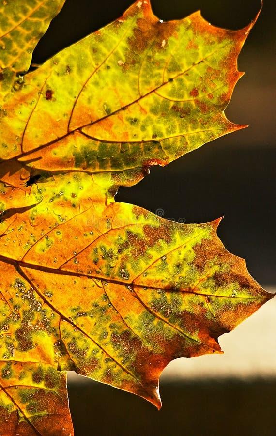 Download Jesienią Przemiany Fotografia Royalty Free - Obraz: 278877