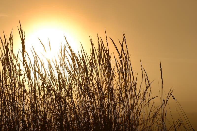 Jesieni słońce zdjęcia stock