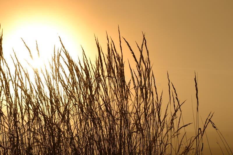 Jesieni słońce obrazy royalty free