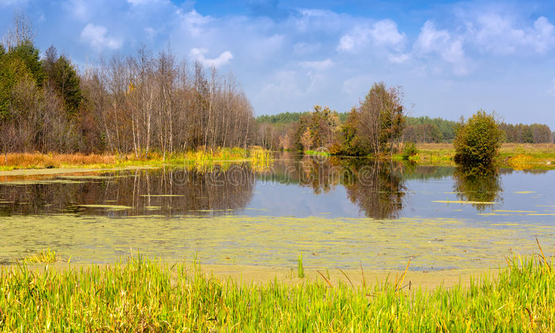 Jesieni scena na jeziorze fotografia royalty free