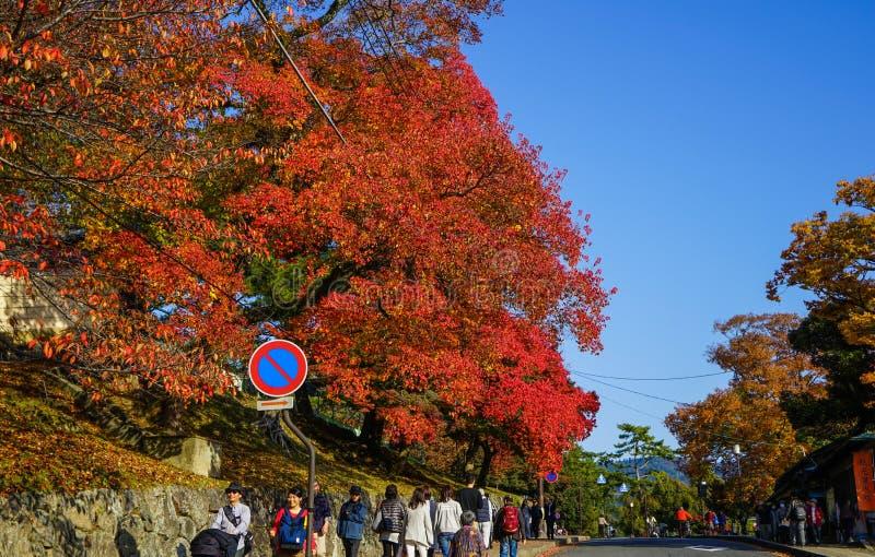 Jesieni sceneria Kyoto, Japonia fotografia royalty free