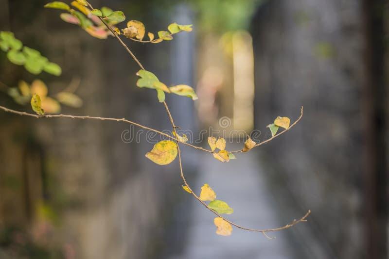 Jesieni sceneria stara brama w wschodniej bramie stara brama zdjęcia royalty free