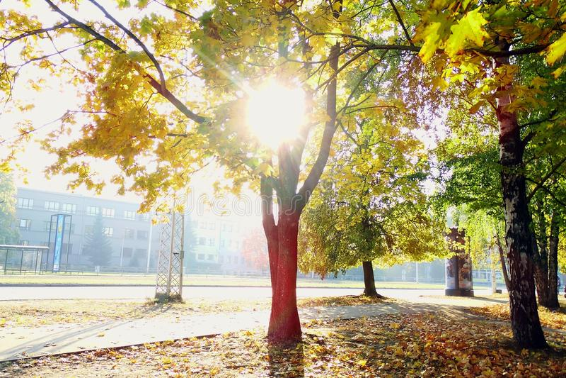 Jesieni sceneria w słonecznym dniu niesamowicie obraz royalty free