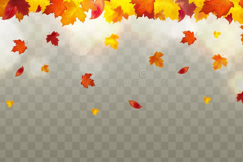Jesieni spada czerwień, kolor żółty, pomarańcze, brąz opuszcza na przejrzystym tle Wektorowy jesienny ulistnienie spadek liście k royalty ilustracja