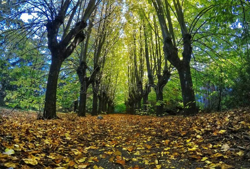 Jesieni streer obrazy royalty free