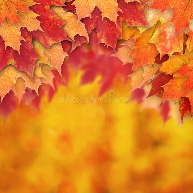 Jesieni tła granica z spadków liśćmi obraz royalty free