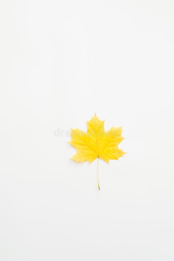 Jesieni tła koloru żółtego abstrakcjonistyczny liść klonowy zdjęcia royalty free