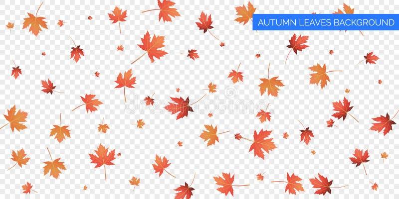 Jesieni tła projekt Jesień spada liście na przejrzystym tle Wektorowy jesienny ulistnienie spadek liście klonowi royalty ilustracja