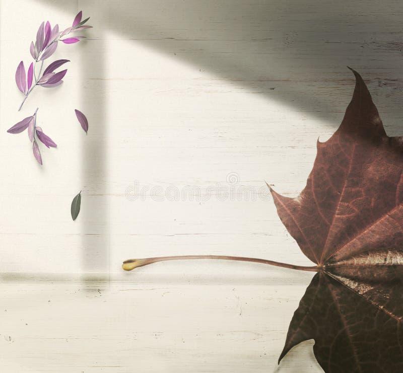 Jesieni tło, liścia spadek, spadek liść zdjęcia stock