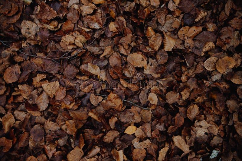 Jesieni tło susi liście zdjęcie stock