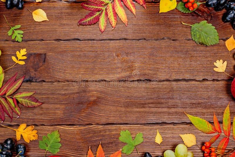 Jesieni tło z kolorem żółtym, z jaskrawymi liśćmi, sosnowymi rożkami, kasztanami i jagodami, Ramowy jesieni żniwo na kraszonym dr obrazy royalty free