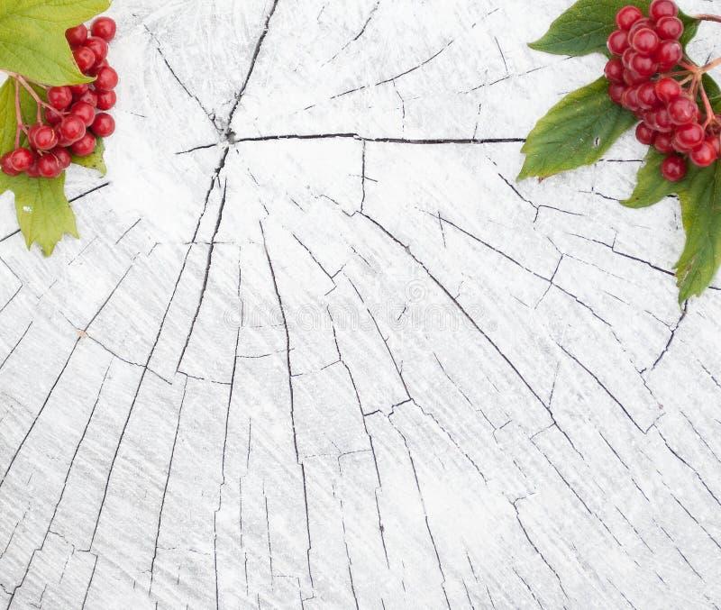 Jesieni tło z zaszalować i jagodami viburnum obraz stock