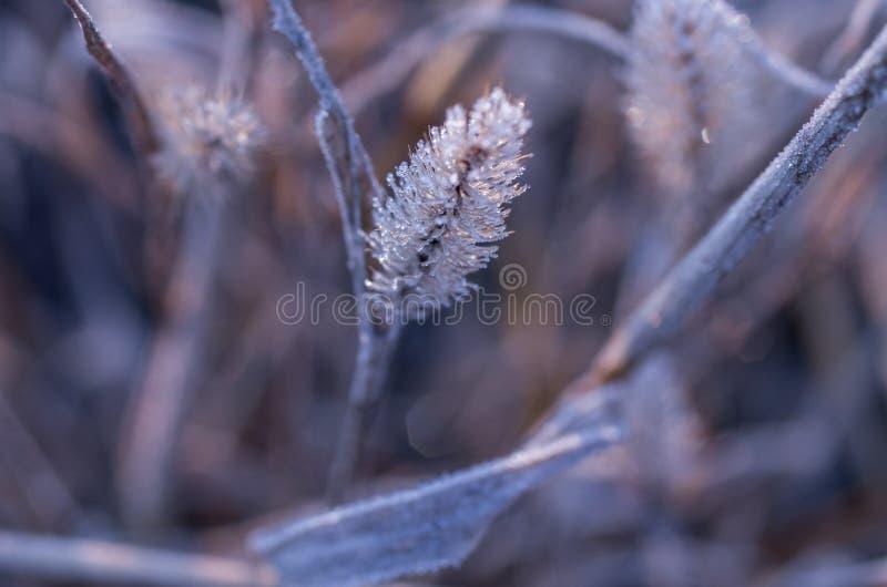 Jesieni trawa zakrywa z hoarfrost połyskiem mróz błyskotliwość jesień obraz royalty free