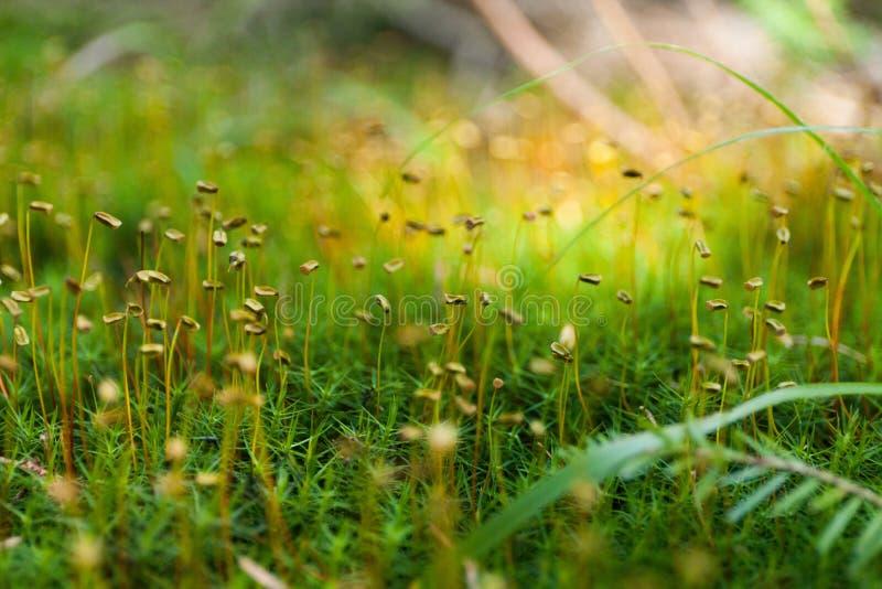Jesieni trawy tło, piękny abstrakcjonistyczny koloru projekt zdjęcie royalty free